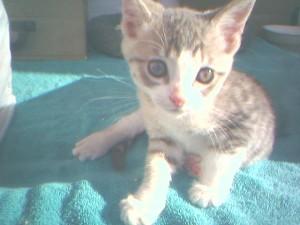Windown kitty