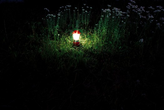 Owl - Lantern in grass
